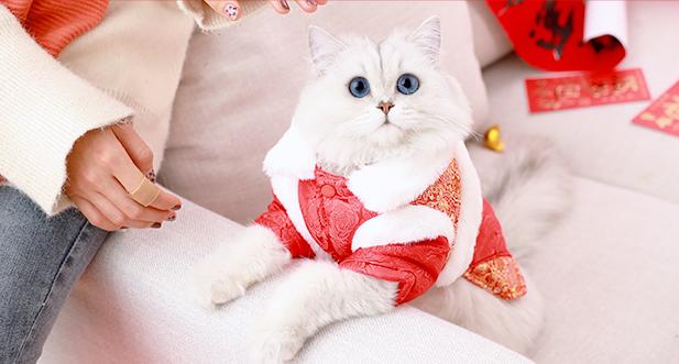 Kinh nghiệm chọn quần áo cho chó mèo